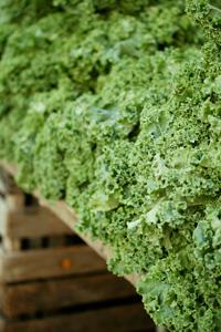 antioxidant-rich-kale