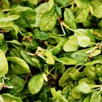 Spotlight on Spinach  – And 15 Ways To Love It