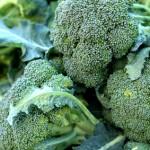 Broccoli Bonanza