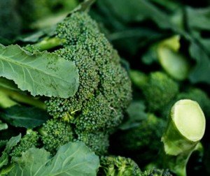 how to pick fresh broccoli