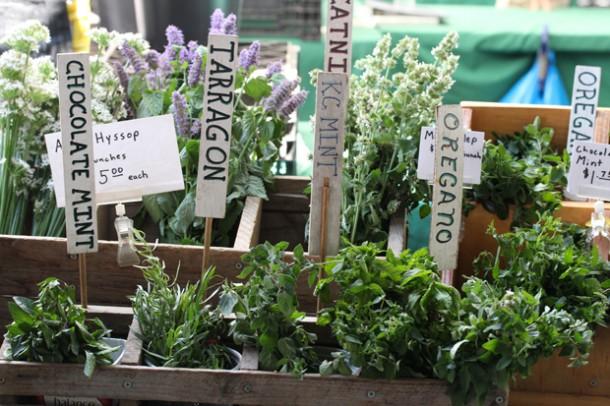 oregano-market