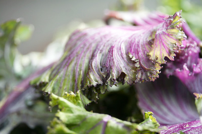 purple kale