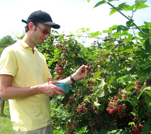 Uli picking blackberries