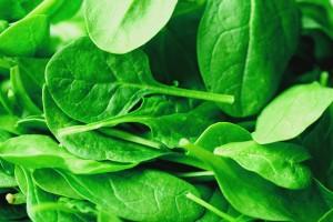 calcium rich spinach