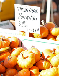 miniature-pumpkins