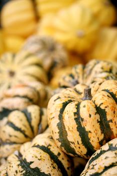 little farmer's market pumpkins
