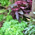 Five Easy Ways to Get Green in the Kitchen
